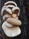 Visage de champignon sur l'arbre photos libres de droits