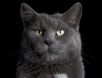 Visage de chat Photographie stock libre de droits