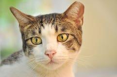 Visage de chat Image libre de droits