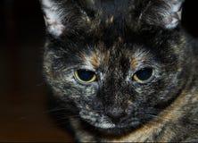 Visage de chat Photos libres de droits