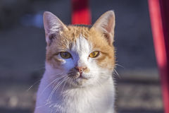 Visage de chat et beau chat de bébé Images libres de droits