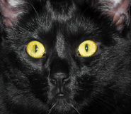 Visage de chat noir Photos stock