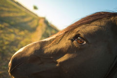 Visage de cheval au coucher du soleil Photos stock
