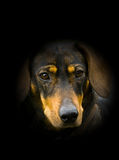 Visage de chien Photo stock