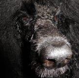 Visage de chien Image libre de droits