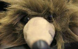 Visage de détail de souris de muppet Photographie stock