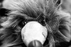 Visage de détail de souris de muppet Photos libres de droits