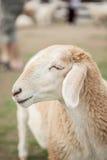 Visage de moutons de sourire Images libres de droits
