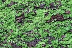 Visage de mur en pierre de latérite Image libre de droits