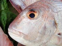Visage de poissons Images libres de droits