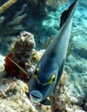 Visage de poissons d'ange images stock