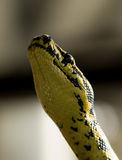 Visage de serpent Photos stock