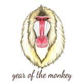 Visage de singe de babouin Image libre de droits
