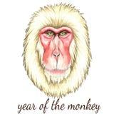Visage de singe japonais Images libres de droits