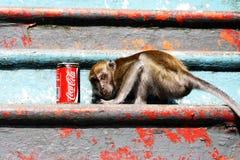 Visage de singe pour le coca-cola images stock