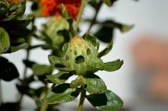 Visage drôle sur un carthame de floraison photographie stock libre de droits