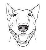 Visage drôle de bull-terrier Photographie stock libre de droits