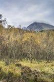 Visage du nord des arbres de Ben Nevis et de bouleau en Ecosse Photographie stock