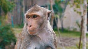 Visage du ` s de singe dans la jungle thailand banque de vidéos