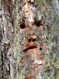 Visage en bois Photo libre de droits