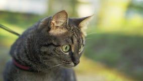 Visage en gros plan de chat banque de vidéos
