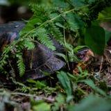 Visage et Shell de tortue photographie stock