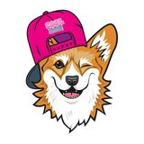 Visage frais de corgi de gallois de chien avec le chapeau rose Illustration de vecteur de couleur Photo stock