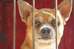 Visage haut étroit de chien dans la cage, le manque se sentant de liberté photo libre de droits