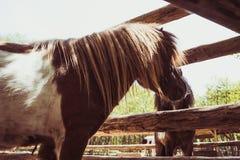 Visage haut ?troit de cheval dans un corral Animal dans une ferme photographie stock