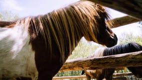 Visage haut ?troit de cheval dans un corral Animal dans une ferme image libre de droits