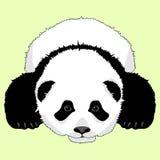 Visage menteur d'ours panda réaliste Photographie stock libre de droits