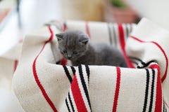 Visage mignon, chatons nouvellement soutenus photos stock