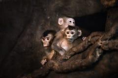 Visage mignon de singe photographie stock