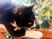 Visage noir et blanc de chat images libres de droits