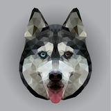Visage polygonal de chien photographie stock libre de droits
