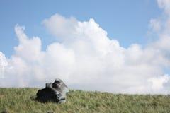 Visage sur l'herbe Photo libre de droits