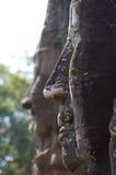 Visages d'Angkor images libres de droits