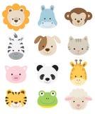 Visages d'animal de chéri Photo stock