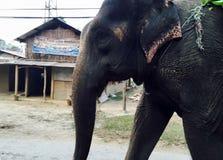 Visages de chitwan Photographie stock libre de droits