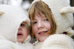 Visages de moutons Image stock
