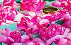 Visakha Bucha Day. Buddha's birthday lotus flower meditation relax concept Vesak day. Visakha Bucha Day water lilly lotus flower. Buddha's birthday lotus flower stock photography