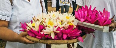 Visakha Bucha Day. Buddha's birthday lotus flower meditation relax concept Vesak day. Visakha Bucha Day with woman's hands holding water lilly lotus flower stock photos
