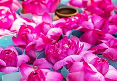 Visakha Bucha Day. Buddha's birthday lotus flower meditation relax concept Vesak day. Visakha Bucha Day water lilly lotus flower. Buddha's birthday lotus flower royalty free stock photography