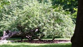Visby botanisk trädgård royaltyfri bild