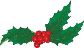 Vischio di Natale con le bacche rosse Fotografie Stock
