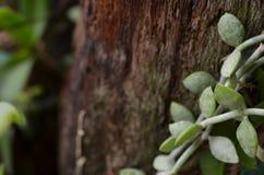 Vischio su legno rustico fotografia stock libera da diritti