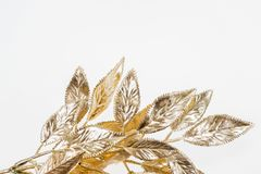 Visco dourado pintado bonito isolado Fotografia de Stock Royalty Free