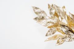 Visco dourado pintado bonito isolado Foto de Stock