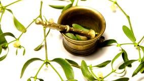 Visco, planta medicinal com almofariz vídeos de arquivo