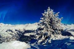 Visgraat in de sneeuw bovenop een berg tegen een blauwe hemel stock foto's
